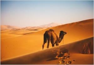 1 week around Morocco tour from Marrakech,private Marrakesh tour to Merzouga